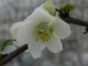 Si Putih dan salju (MACRO, ISO 100, exposure -3)